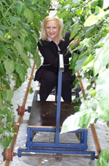 Debra Picking Tomatoes from the Trolley at Vikentomater, Skane, Sweden