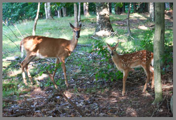 Deer at The Menla Mountain Retreat and Mahasukha Spa - photo by Danile Aubry