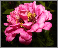 Pink Zinnia - The Menla Mountain Retreat and Mahasukha Spa - Photo by Luxury Experience