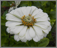 White Zinnia - The Menla Mountain Retreat and Mahasukha Spa - Photo by Luxury Experience