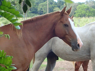 Horses - Pousada Pequi - Aquidauana, Mato Grosso, do Sul, Brazil - photo by Luxury Experience