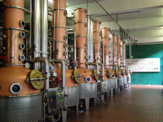 Swiss Vodka - Rows of copper stills