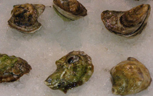 Chefs Creek Oysters - Photo by Luxury Experience