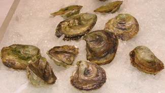 Mermaid Cove Oysters - Photo by Luxury Experience