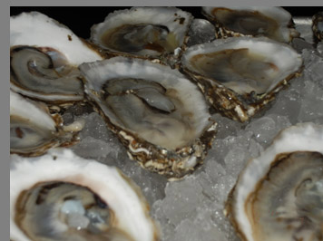Oysters - Docks Oyster Bar and Seafood Grill - NY, NY, - photo by Luxury Experience