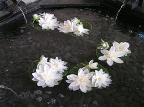 Six Senses Spa water lilies