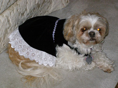 Bailey in her Little Black Dress