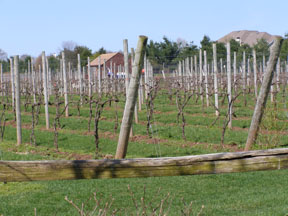 Crossing Vineyards Vines - Bucks County Wine Trail, Pennsylvania - Photo by Luxury Experience