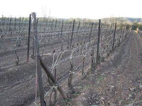 Sand Castle Winery Vines - Photo by Luxury Experience
