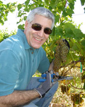Edward F. Nesta picking grapes at Gouveia Vineyards - Photo by Luxury Experience