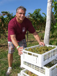 Nick Amarone carrying bins at Gouveia Vineyard - Photo by Luxury Experience