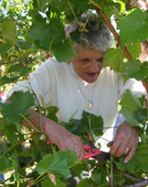 Mrs. Fonseca Picking Grapes at Gouveia Vineyard - Photo by Luxury Experience