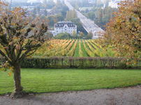 Domaine Zweifel - The Art of Making Swiss Wine